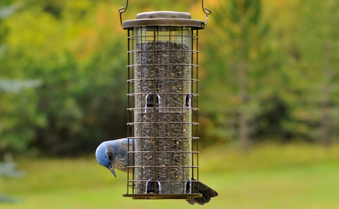 Fall Bird Feeding Tips | READ THIS | Birding Backyard & Beyond